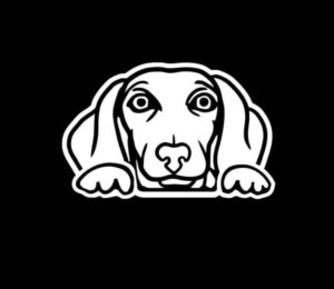Dachshund Weiner Dog Peeking Vinyl Decal Stickers