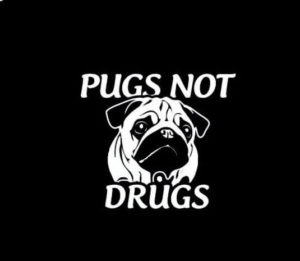 Pugs not Drugs Vinyl Decal Stickers