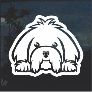 Maltese Peeking Dog Window Decal Sticker